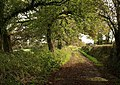 Worthy Lane - geograph.org.uk - 1024998.jpg