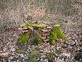 Wuppertal Barmer Wald 0016.jpg