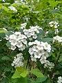 Y Poznań flowers.jpg