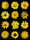 Yellow flowers a.jpg