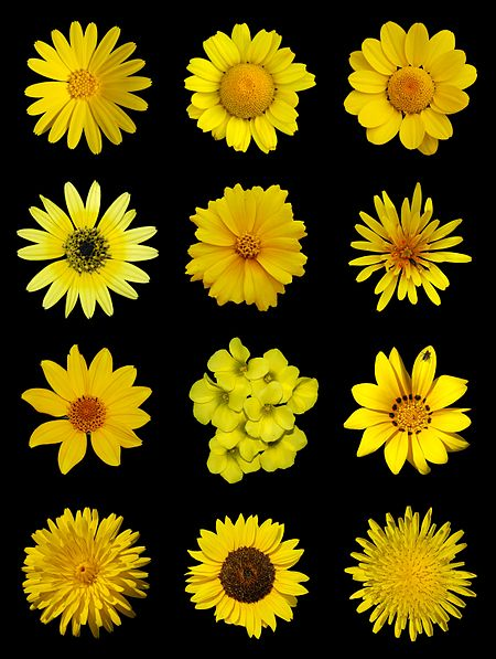 A poster of yellow flowers