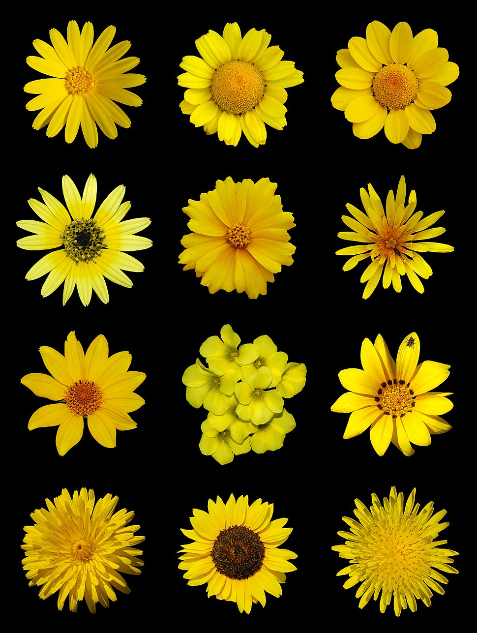 Yellow flowers a