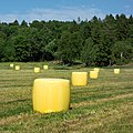 Yellow silage bales in Heden 3.jpg