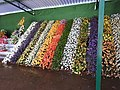Yercaud 44th Flowershow-12-yercaud-salem-India.jpg