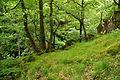Yew Tree Gorge (7524).jpg