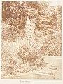 Yucca Gloriosa MET DP143503.jpg