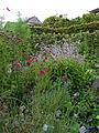 Yvoire-Jardin des Cinq Sens (1).jpg