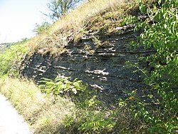 Zalishchyky bed of Lower Devonian (2).jpg