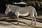 Zebra July 2008-3.jpg