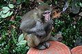 ZhangJiaJie Monkey.jpg