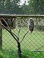 Zoo Tábor-Větrovy, sovy 03.jpg