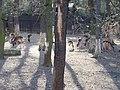 Zookoutek Chuchle, daňci (02).jpg