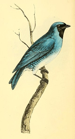 Zoological Illustrations Volume I Plate 21.jpg