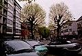Zottegem Heldenlaan Gekandelaarde platanen (2) - 190543 - onroerenderfgoed.jpg