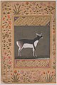 """Black Buck"", Folio from the Shah Jahan Album MET sf55-121-10-17a.jpg"