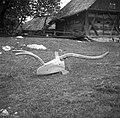 """Drvo"", plug star 65 let, Sad, pri Kozlevčarji (plug sedaj last EM Ljubljana) 1950 (2).jpg"