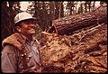 """FALLER"" D.JACKSON AND FELLED RED FIR TREE - NARA - 542781.jpg"