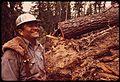 """""""FALLER"""" D.JACKSON AND FELLED RED FIR TREE - NARA - 542781.jpg"""