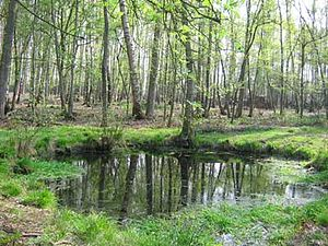 Schoten - 't Asbroek nature reservation in Schoten