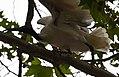 (1)Ibis Sydney 040.jpg