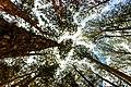 Árvores no parque.jpg