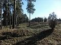 Årsunda Sörby gravfält (Raä-nr Årsunda 9-1) 0566.jpg
