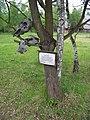 Řepora, posvátný strom s tabulkou.jpg