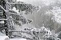 Ай-Петрі взимку 11.JPG
