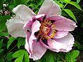 Ботанічний сад ім. М.Гришка IMG 0361.jpg