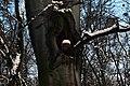 Голосіївський ліс DSC 0116.jpg