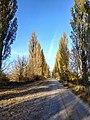 Дорога зі с. Буйволівці, фото 2.jpg