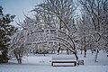 Зимові алеї в парку. перший сніг.jpg