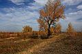 Одиноко стоящее дерево - panoramio.jpg