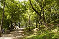Парк-пам'ятка м. Кам'янець-Подільський, по вул. Шевченка P1280478.jpg