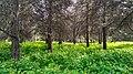Парк зрощувального садівництва 4.jpg