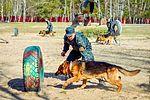 Собаки НГУ 4200 (18732235874).jpg