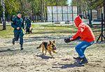 Собаки НГУ 4250 (18732230204).jpg