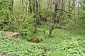 Трускавецький парк 29.jpg