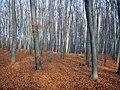 Украина, Киев - Голосеевский лес 211.JPG