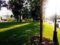 Чудесный зелёный газон в Парке Горького.jpg