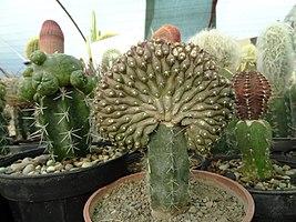گلخانه کاکتوس دنیای خار در قم. کلکسیون انواع کاکتوس 13.jpg