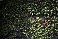 گیاهان در پاییز - باغ بوتانیکال تفلیس 08.jpg