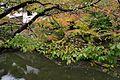 倉敷川 Kurashiki Canal - panoramio.jpg