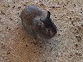 兔子 Rabbit - panoramio.jpg