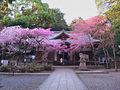 春の保久良神社.jpg