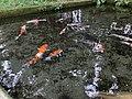 水出し観音のきれいな池 - panoramio.jpg