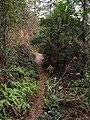 牛山溪登山道 - Niushanxi Mountain Trail - 2015.01 - panoramio (1).jpg