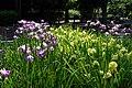 菖蒲池 - panoramio (5).jpg