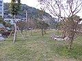 西山公园的花坛 - panoramio.jpg