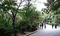 锦江山山路 road on Jin Jiang hill - panoramio.jpg